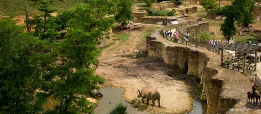 Bio Parc doué la Fontaine - rhinocéros
