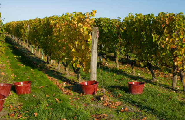 Vignoble Langlois Château